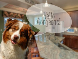 Real Estate Photos with Pets